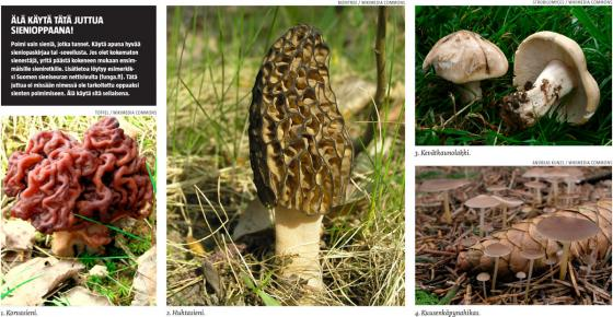 Sienet kuvina