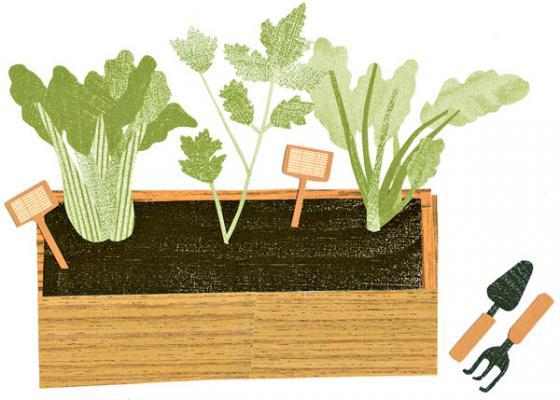 Piirros parvekelaatikosta salaatteineen.