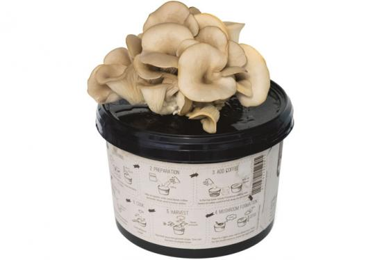 Sienien kotikasvatus