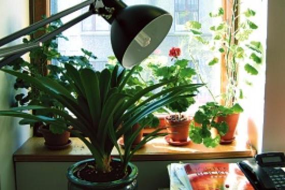 Toimistolamppu ja kasveja.