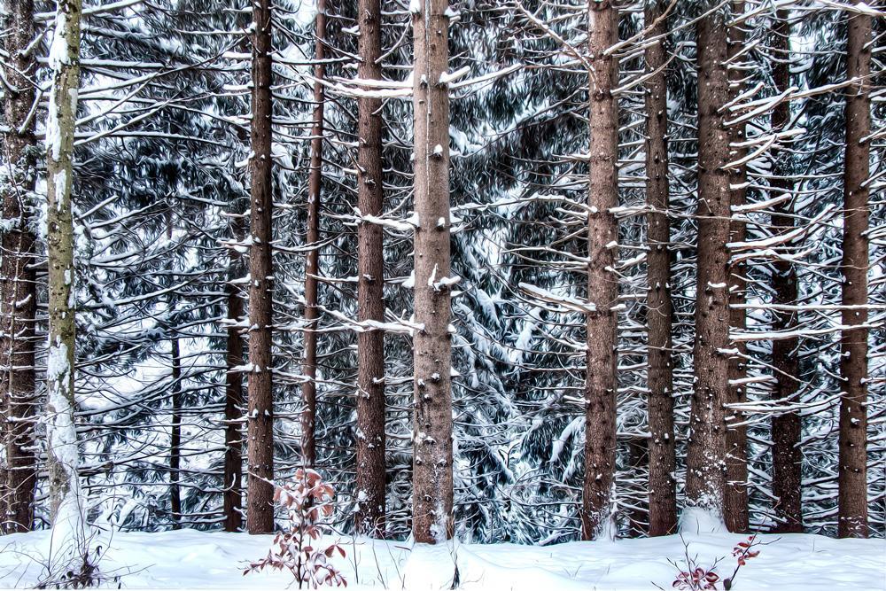Lumista metsää