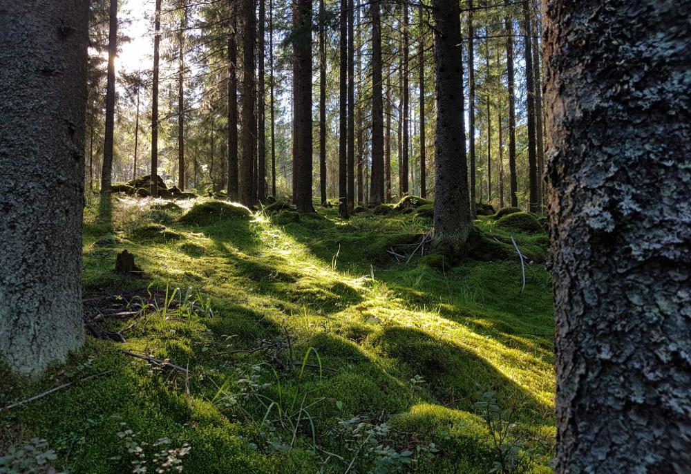 Varjoja metsässä