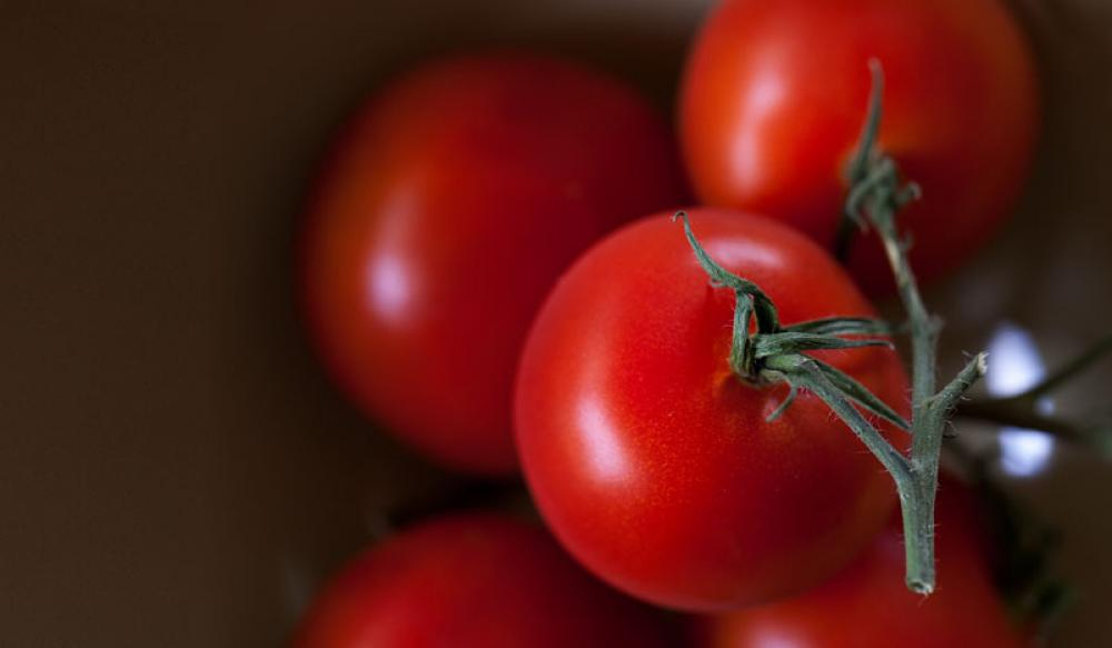 Tomaattia