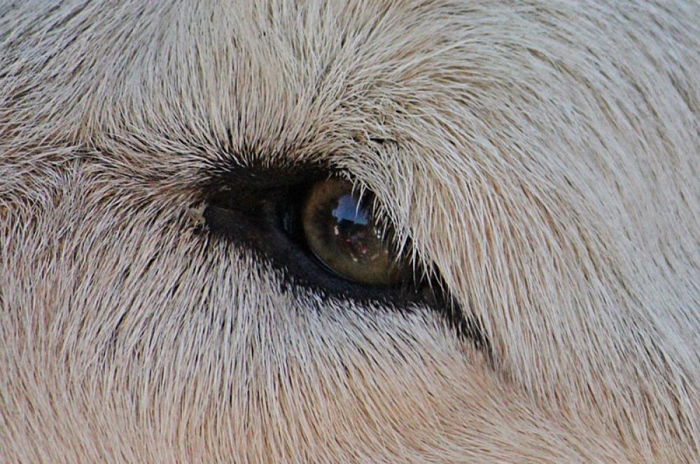 Suden silmä