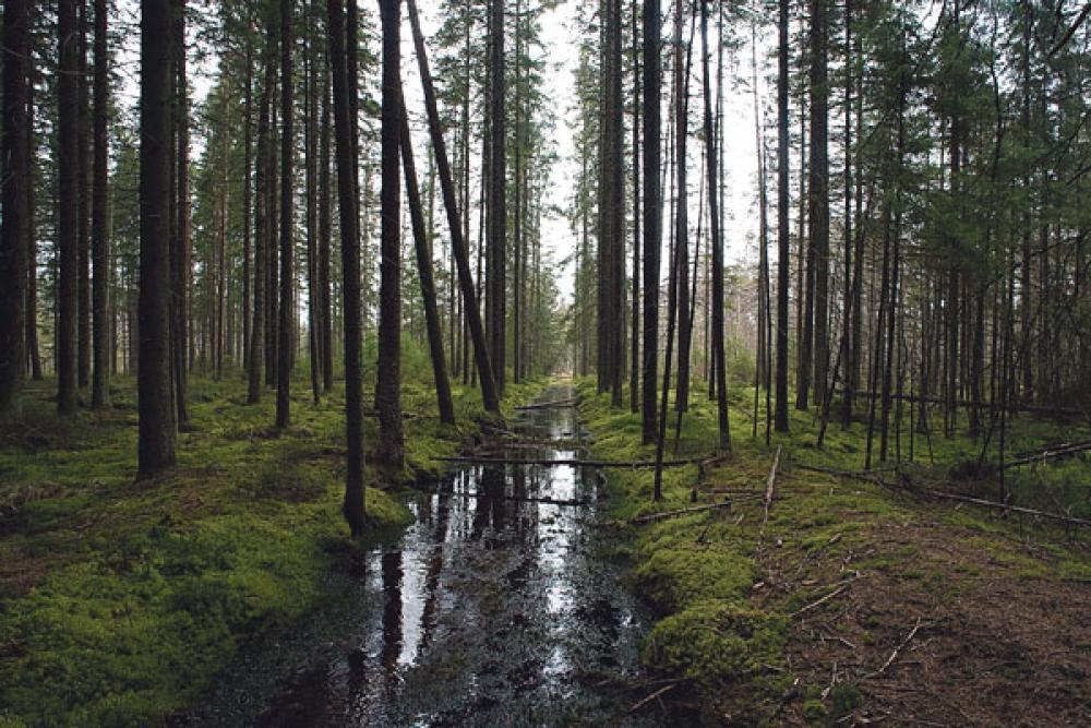 Metsämaisema.