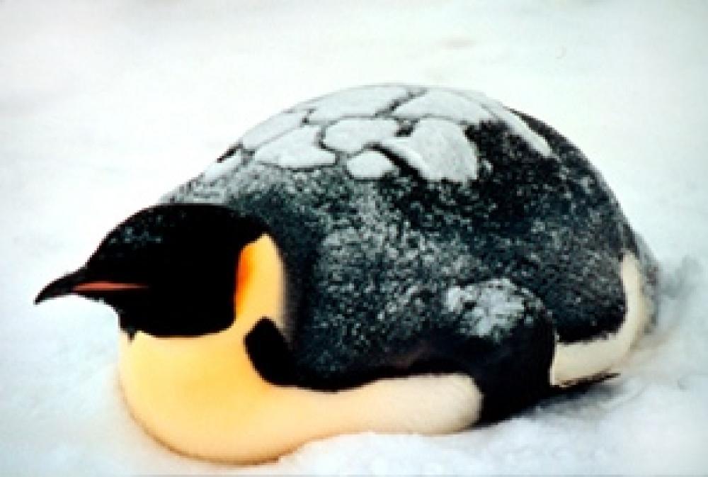 Pingviini.