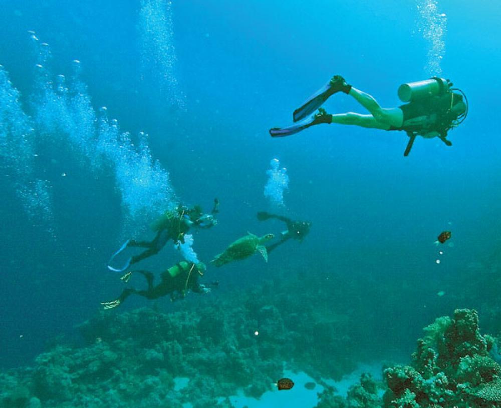 Sukellusta kilpikonnan kanssa.