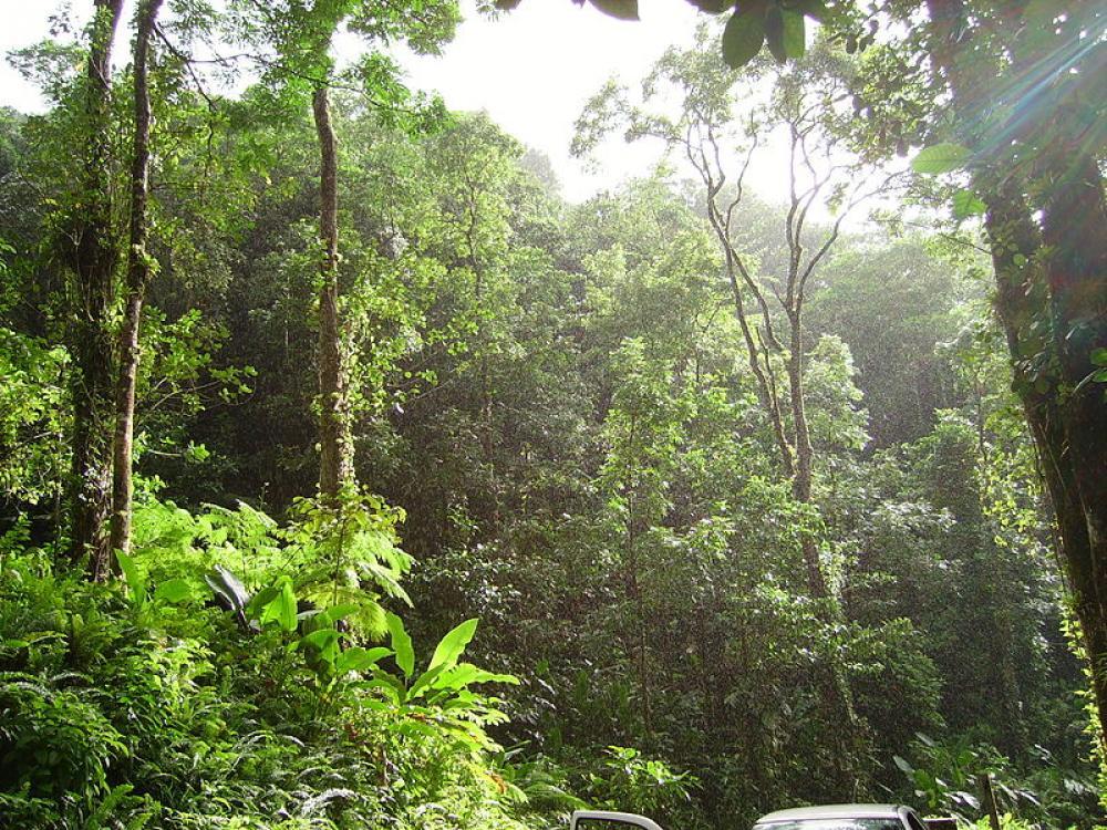 Trooppista metsää Martiniquessa.