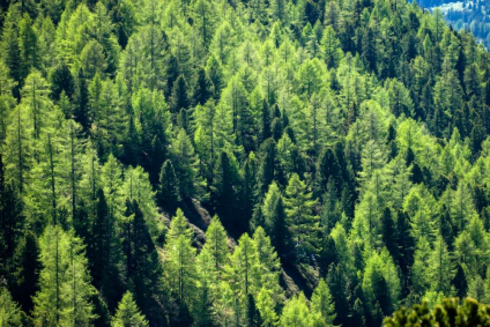 Metsää vuorenrinteessä.
