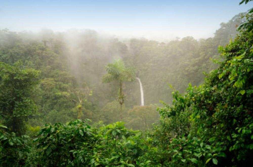 Costa Rican sademetsä.