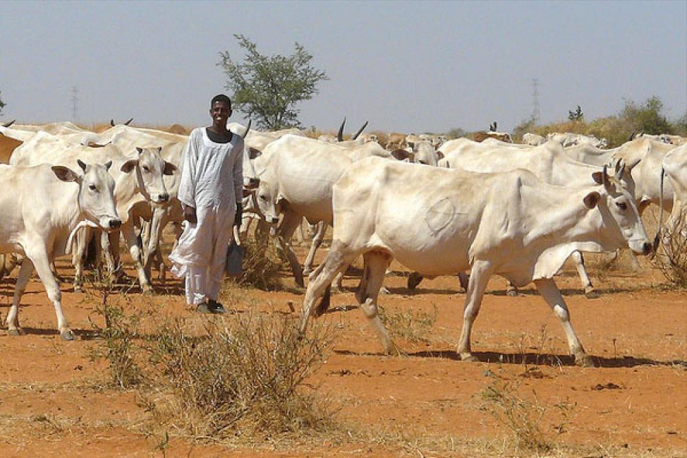 Karjaa Khartumissa.
