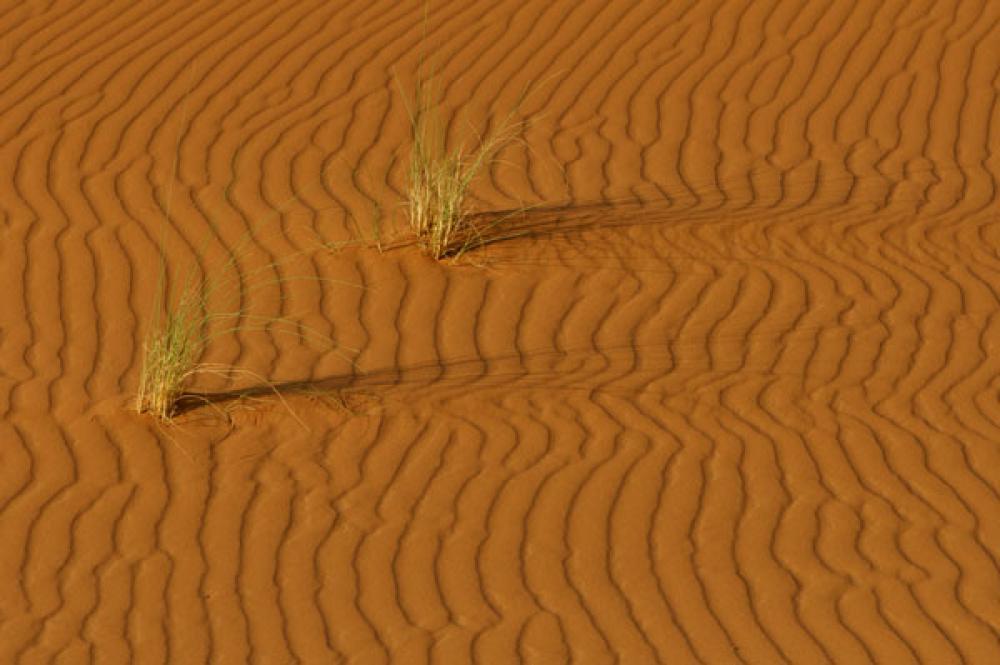 Aavikkoa.