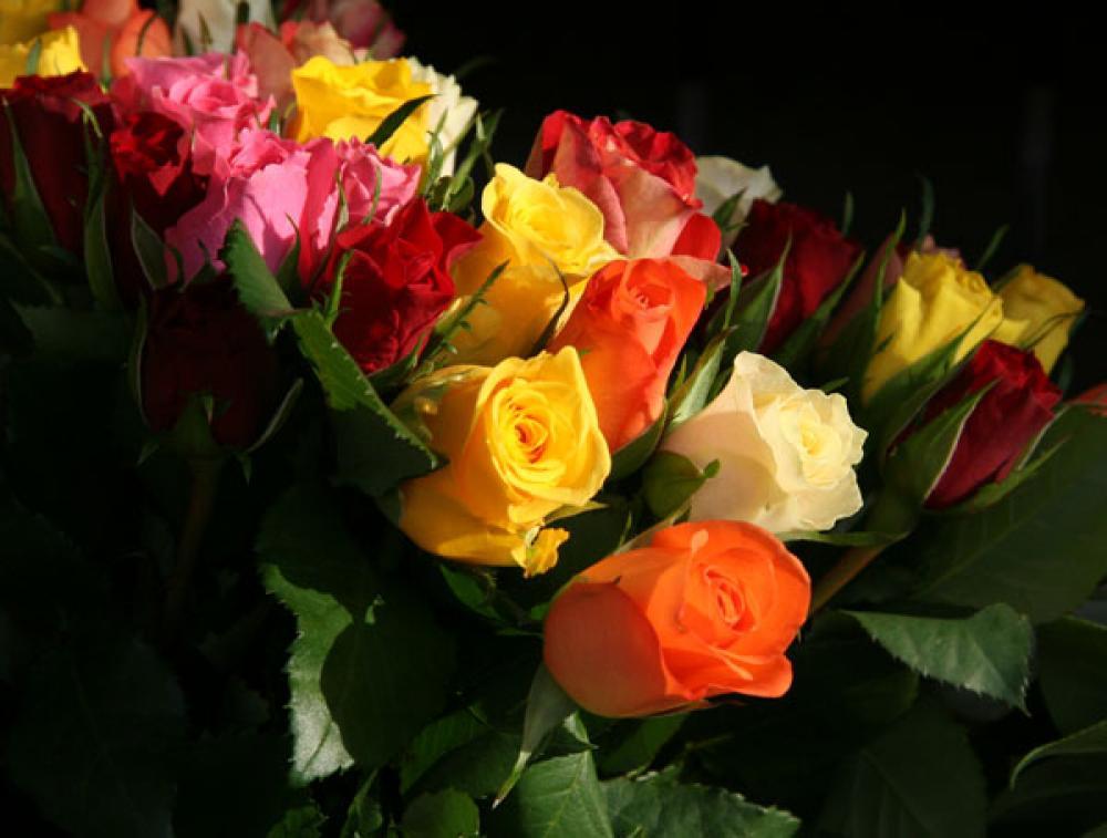 Ruusuja.