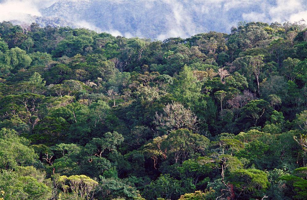 Metsää Malesiassa