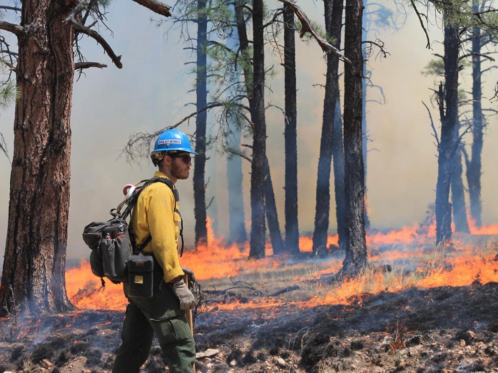 Metsäpalo ja sammuttaja