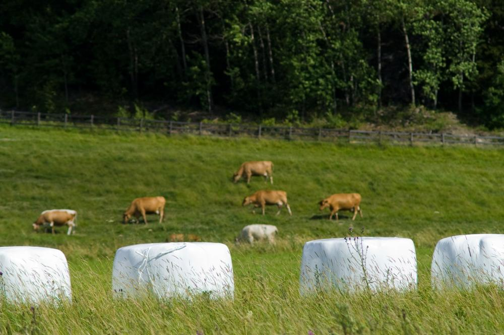 Karjaa
