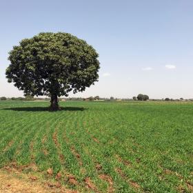 Etiopian maaseutu