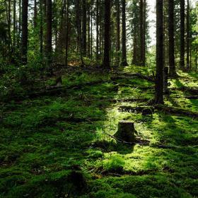 Kanto metsässä